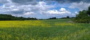 weite, flache Wiesen und Felder sind typisch